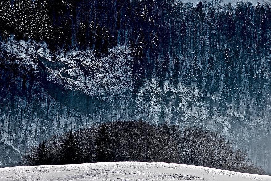 Gruyère, Bosque – Versión 2.jpg