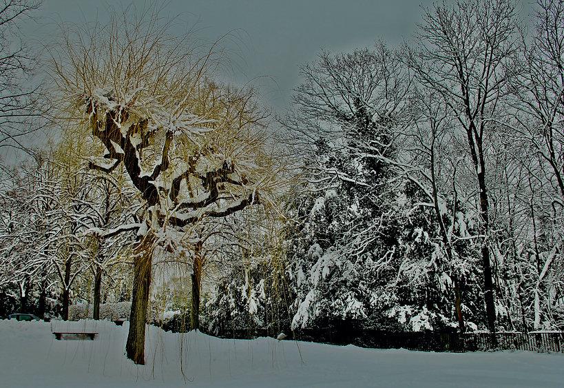 Ginebra, Invierno 1 copia.jpeg