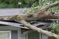 Home Insurance Attorney helps when trees