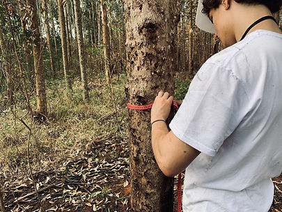 inv florestal 2.jpeg