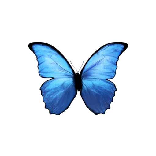 butterfly with no bottom background.png