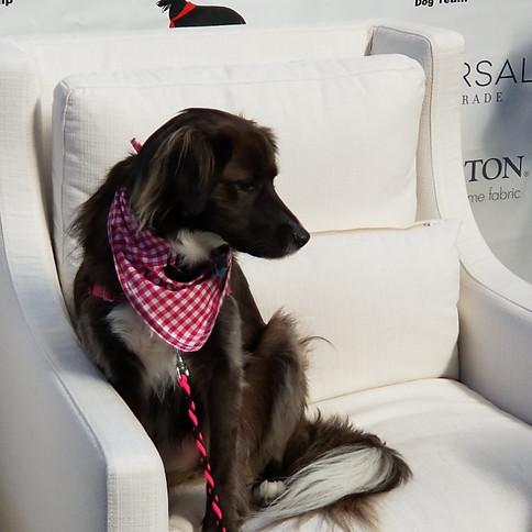 Black Market Dog