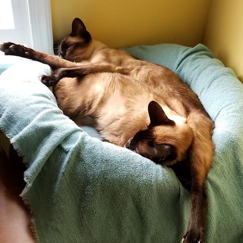 Comfortable Clients