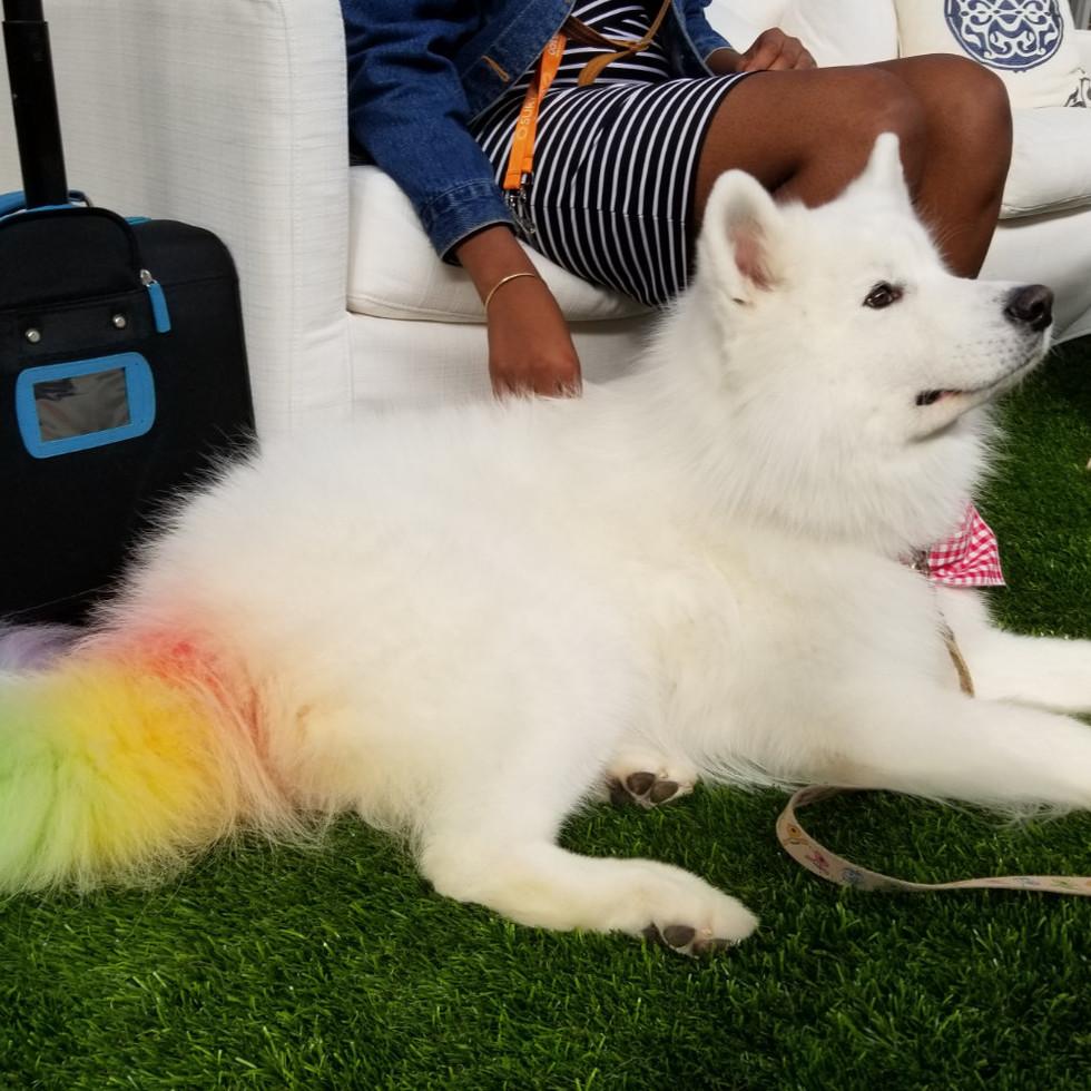 Rainbow Market Dog