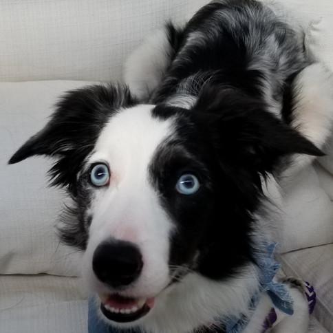 beautiful blue eyed market dog.jpg