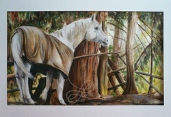 Watercolor of a Horse