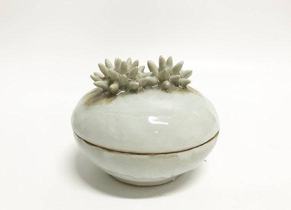 Sea urchin box