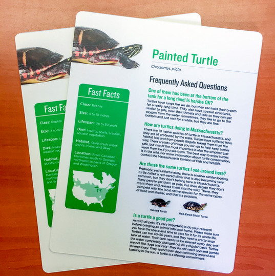 Painted Turtle Informational Cards
