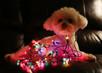 AVMA Holiday Pet Safety Tips