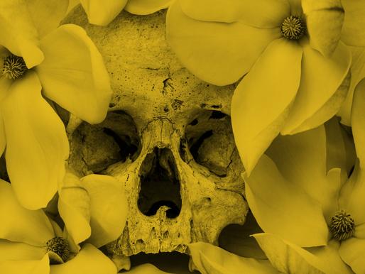 Roses from Bones Lyrics: Guillotine