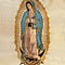 guadalupe 4.png