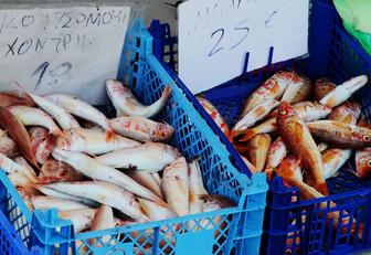 fish-kef.jpg
