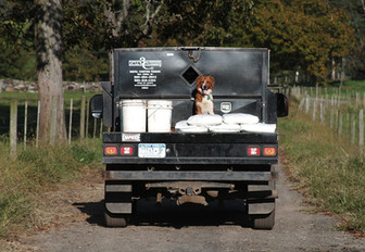 farm-dog.jpg
