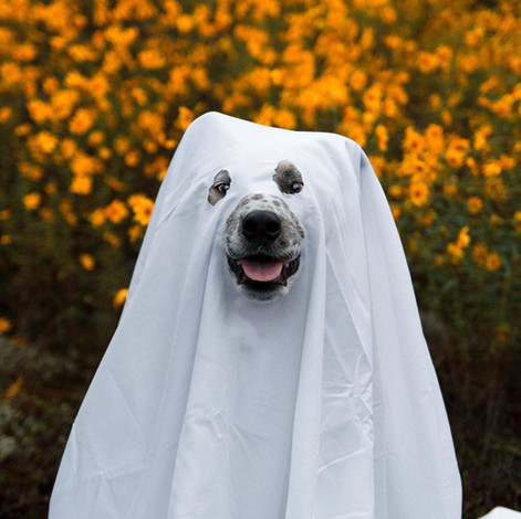 The Best DIY Halloween Costumes For Your Dog!