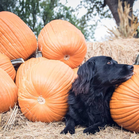 Autumn is Here - Make Sure Your Dog is Ready!