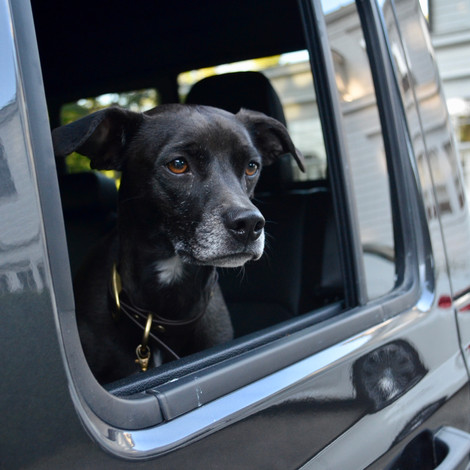 Road Trip Packing List - Everything You'll Need for Your Pup