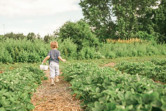 toddler carrying white basket_edited.jpg