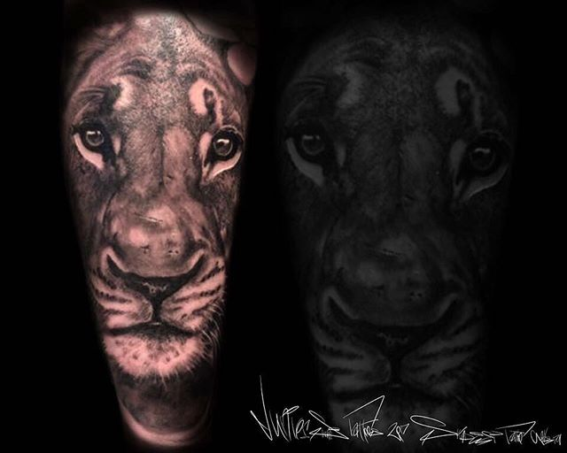Yesterday's lioness piece complete by _juniorsilivaaitattoos _skindeeptattoogallery _usocollective #
