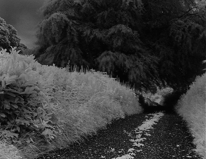Sentier infrarouge.jpg