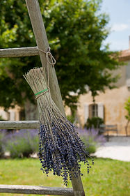 La Garance en Provence - Bunch of lavender