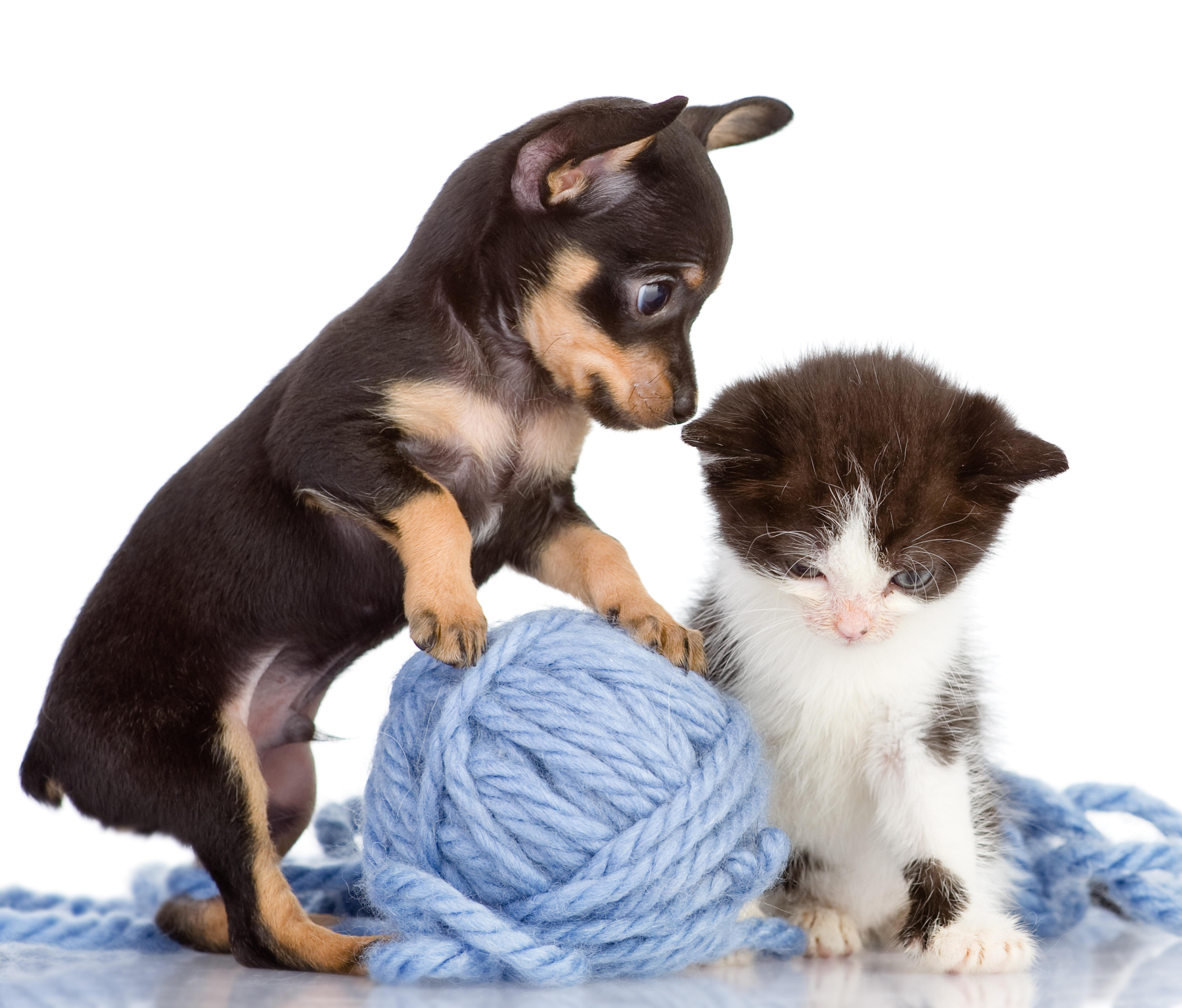 10-PuppyAndKitty