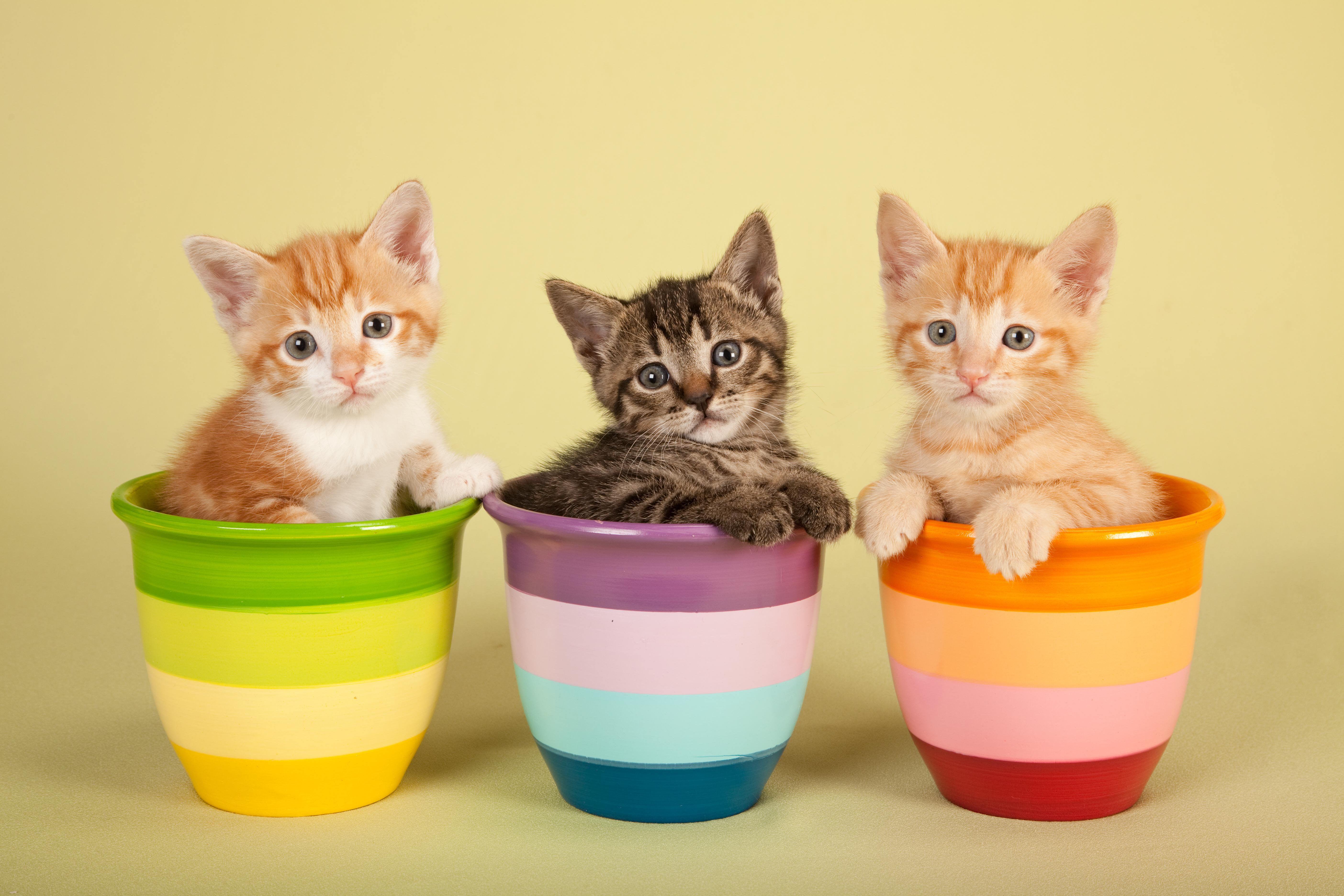 1-CuteCats