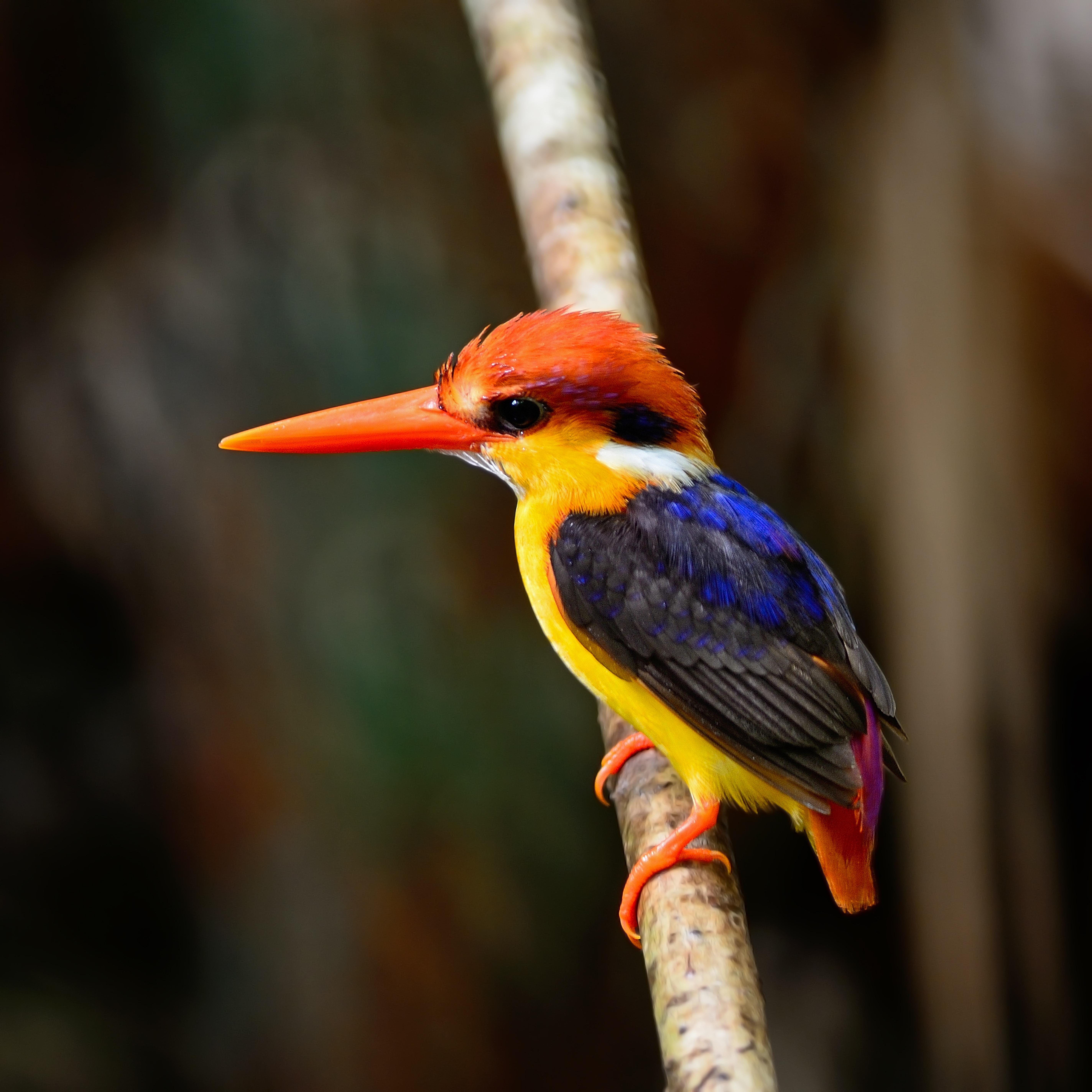 15-ColorBird