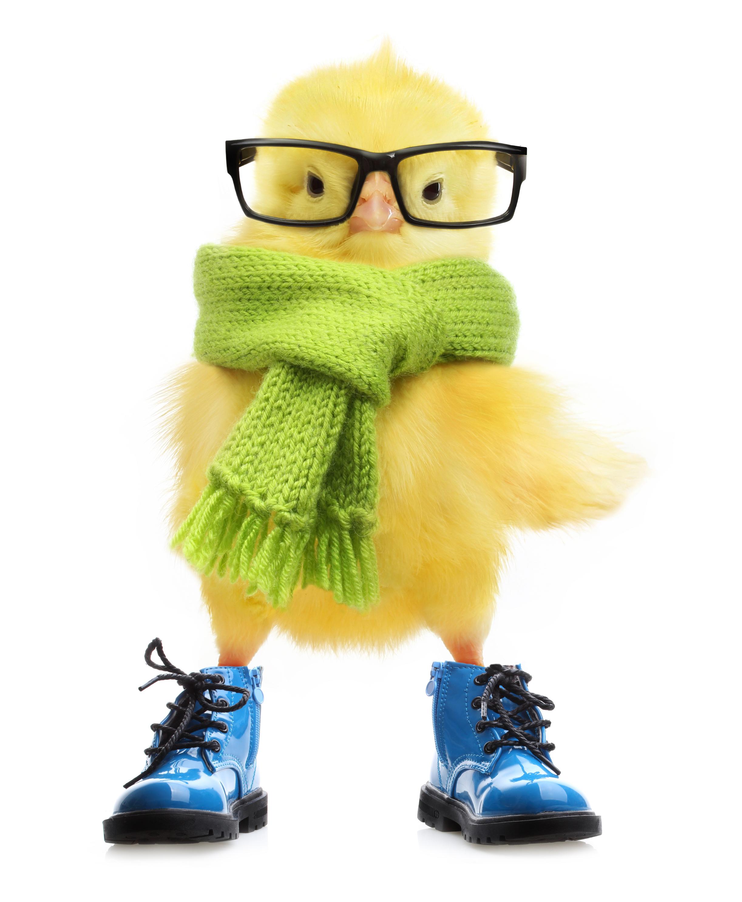 21-Chick