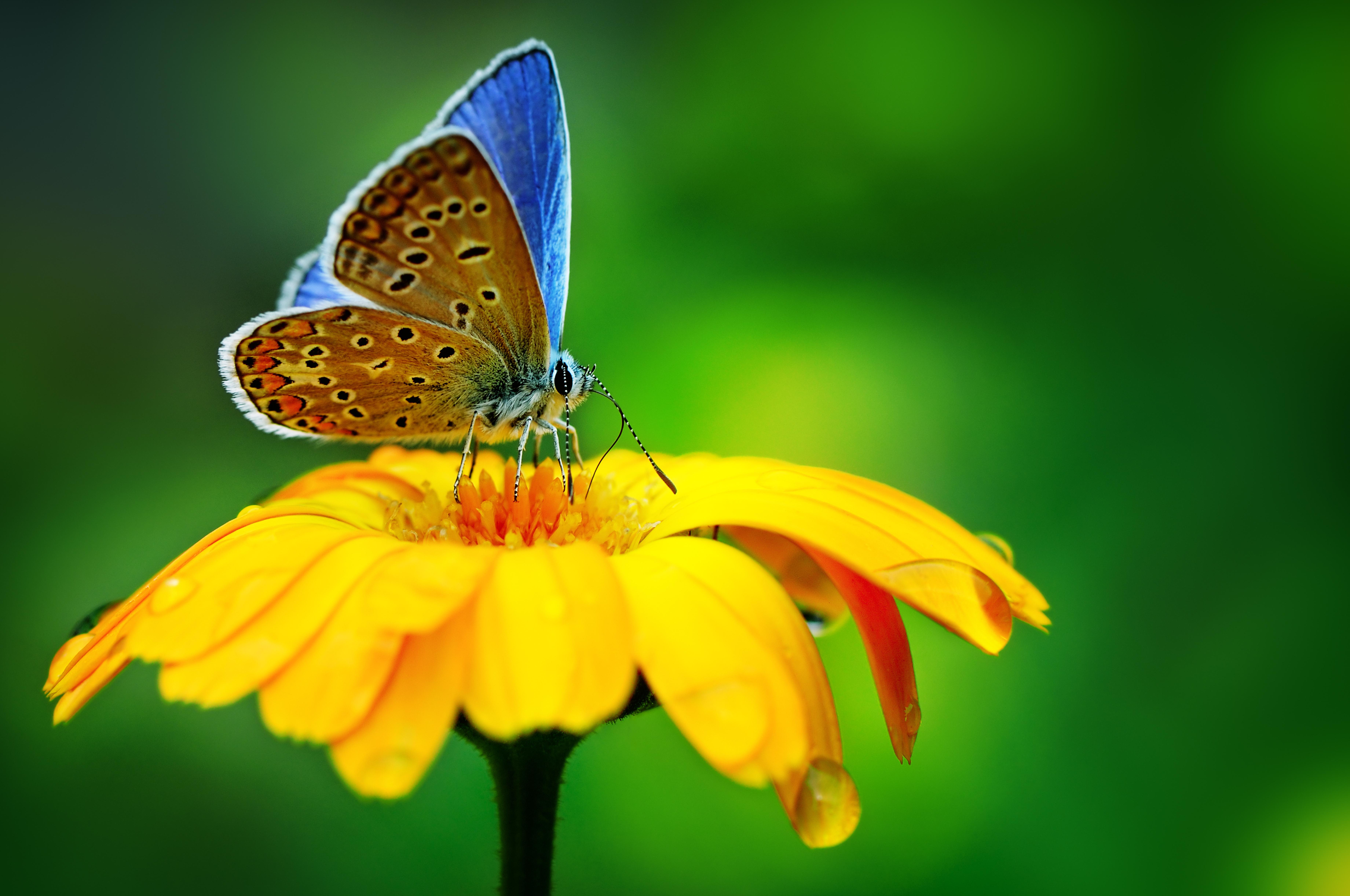 8-Butterfly