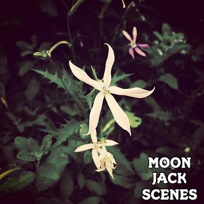 モンジャクシンズ/MOON JACK SCENES 【1CD】  2017.4.22発売