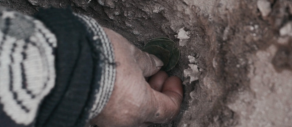 A close up desaturated color image of a hand placing a group of small pilled up leaves in the soil. Overlaid in white capital letter the words: The Endless Battle.
