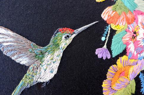 Colibrí Austral Detalle