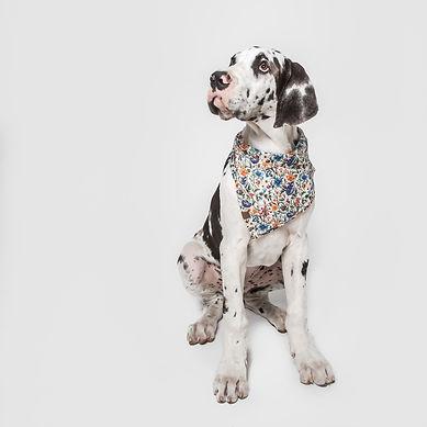 Cloud7-Dog-Bandana-Liberty-Dog-2.jpg