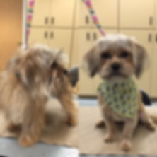 Olive Dogs Grooming Salon Before and after image