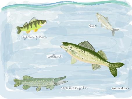 Mendota's Zooplankton