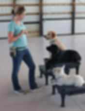 Puppy Socializatin and Training