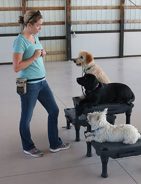 Puppy Socializatin and Training