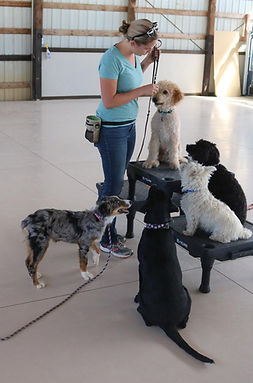 Puppy Socialization and Training
