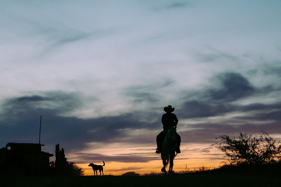 silhouette-of-person-riding-horse-261837