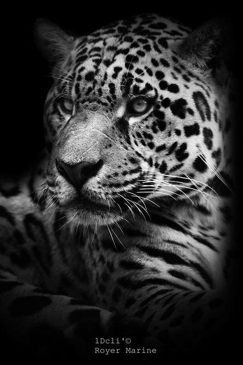 royer marine.photographe animalier