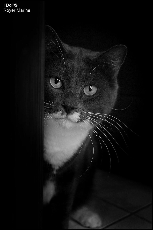 photo.animaliere.photographe.aveyron