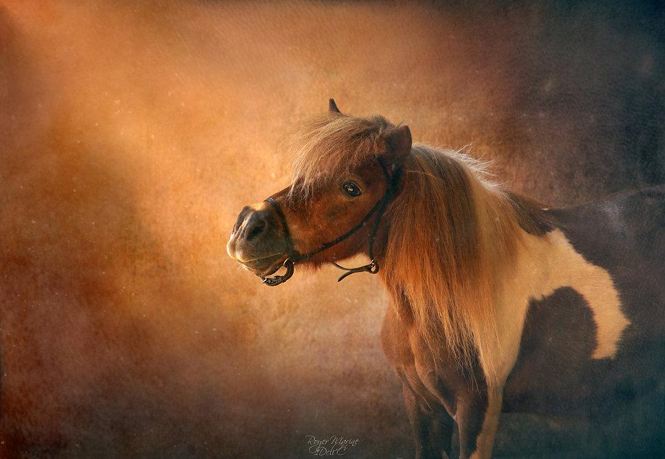 photographe animalier.LOT