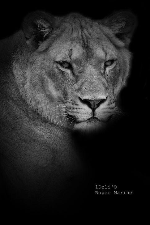 photographe.animalier.aveyron.royer