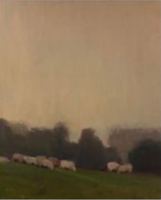 Sheep in Mist.jpeg