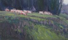 Sheep in Lavender