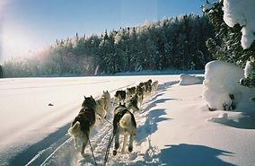 Siberian-Husky-Sled-Photo_027.jpg