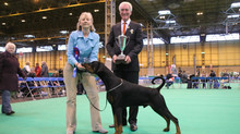 Satchmo BOB and shorlisted in group at Crufts