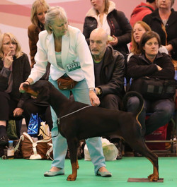 Crufts 2015 © Anthony Bethell