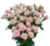 Купить кустовые розы Псков
