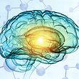 brain for preview.jpg